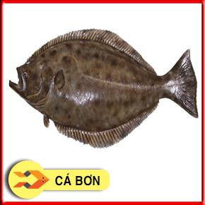 Cá bơn