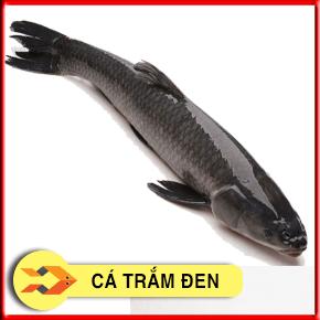 Cá trắm đen