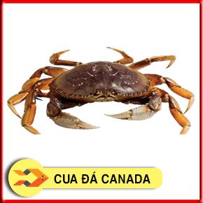 Cua đá Canada