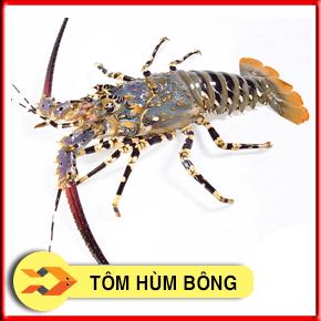 Tôm hùm Bông Sống