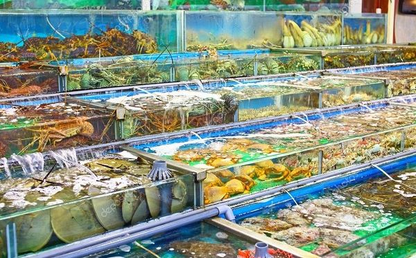 Chợ Hải Sản Tươi Sống Online Tại Hà Nội | Hải Sản Biển Đông Ngon Sạch